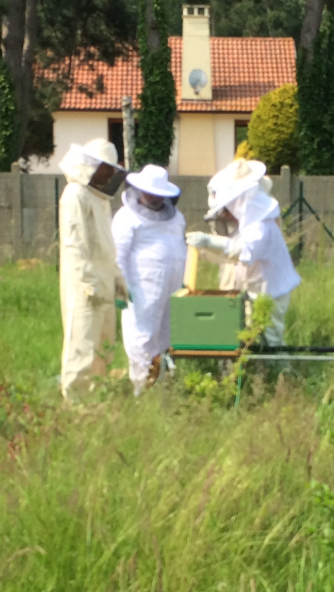 Apiculture IME Rang
